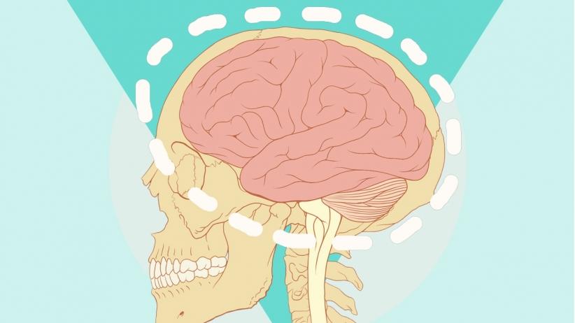 20150311170104-brain-skull-human-medical